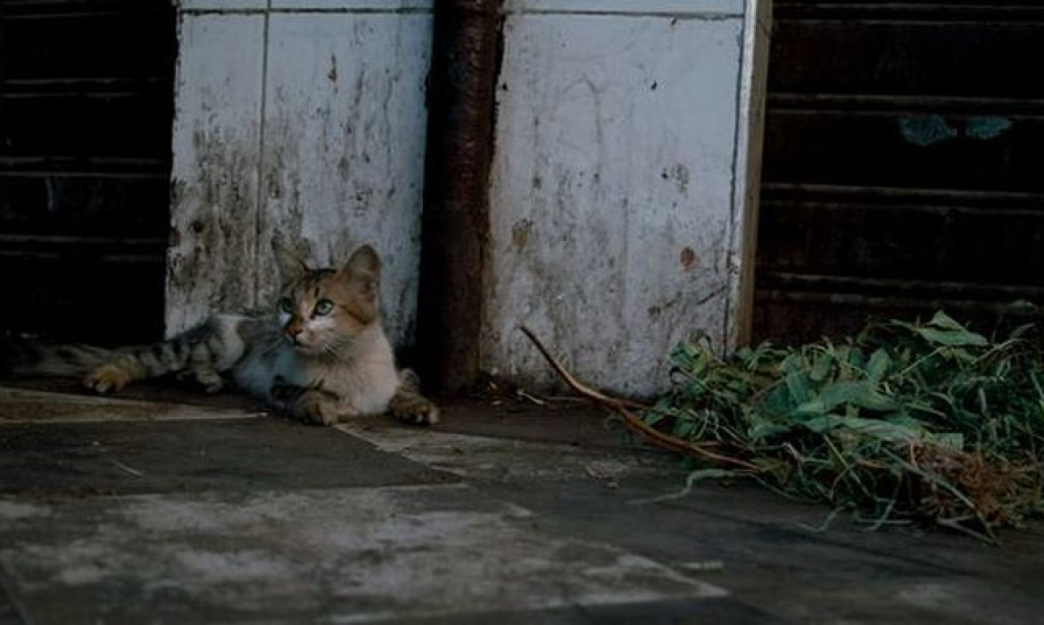 Straying Cat – Marrakech