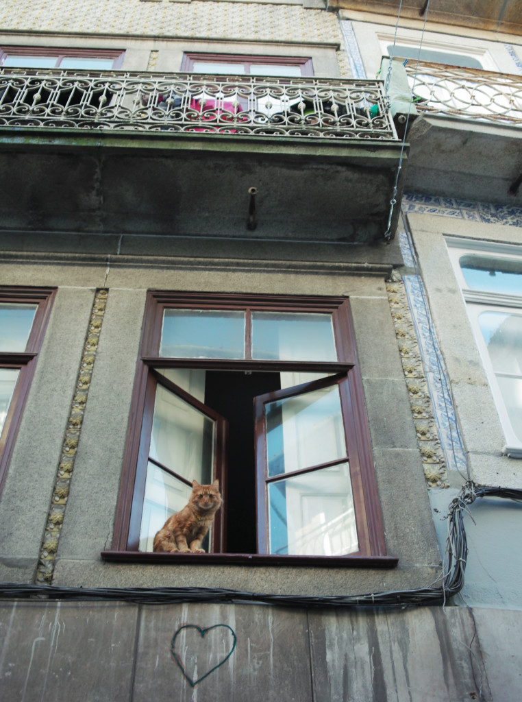 Rundreise durch Portugal - Katze Porto