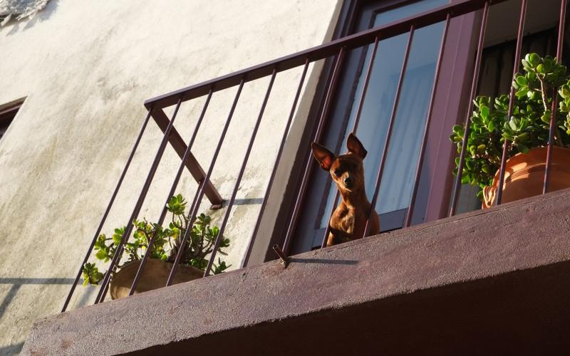 Porto Tipps – Hund am Fenster 2