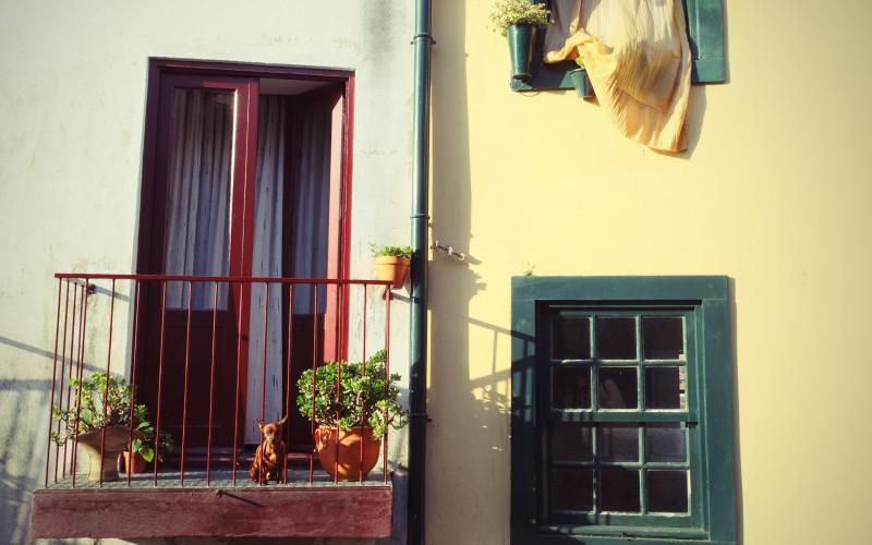 Porto Tipps – Hund am Fenster