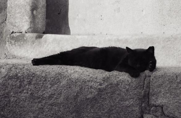Porto Tipps - Katze