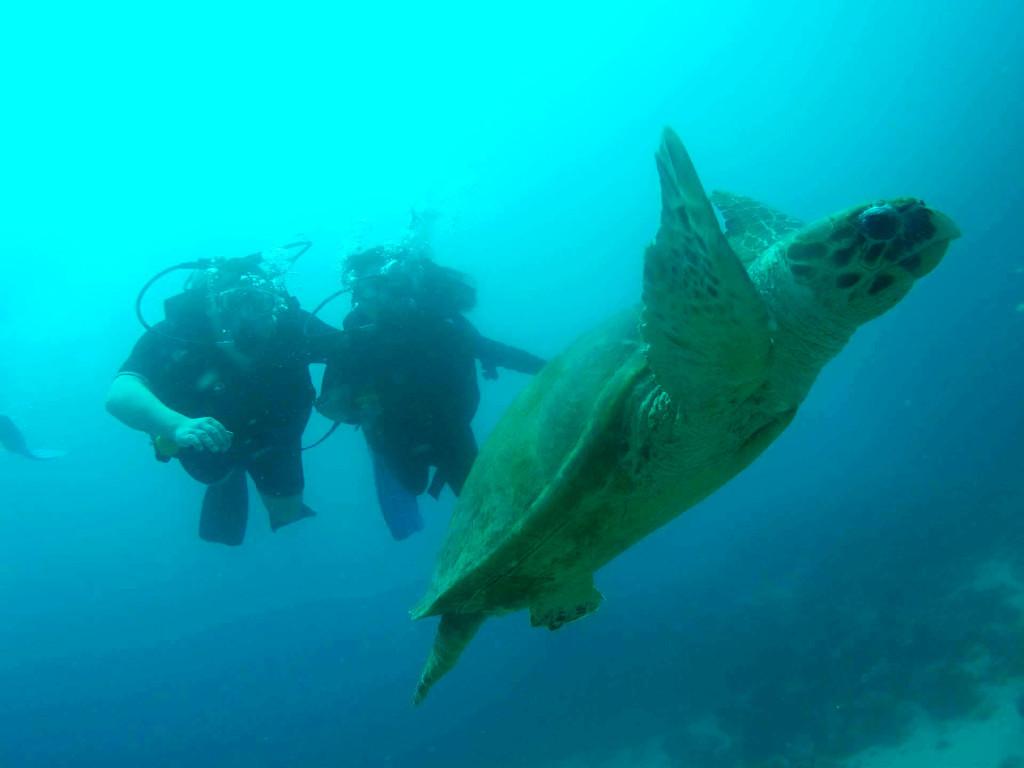 Dahab Diving Underwater World
