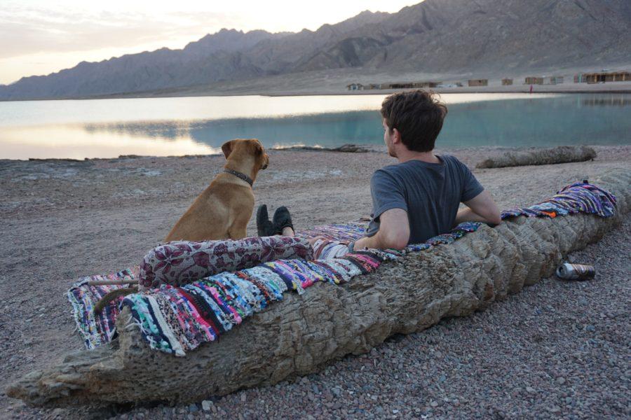 Blue-Lagoon-Dahab-Sunset-Dog
